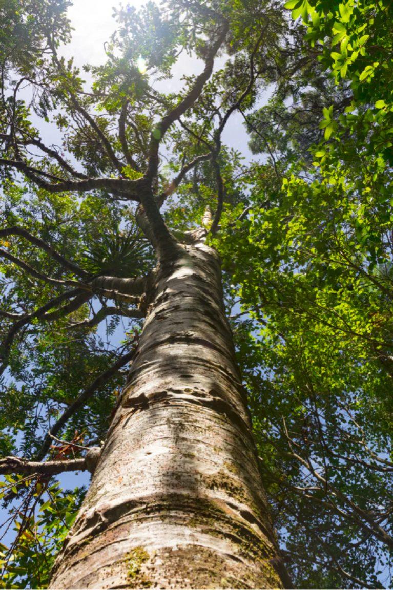 Boom CO2 compenseren aanplanten van bomen Bwoods VZW Planten compenseren aanleggen van bossen Doneer doneren